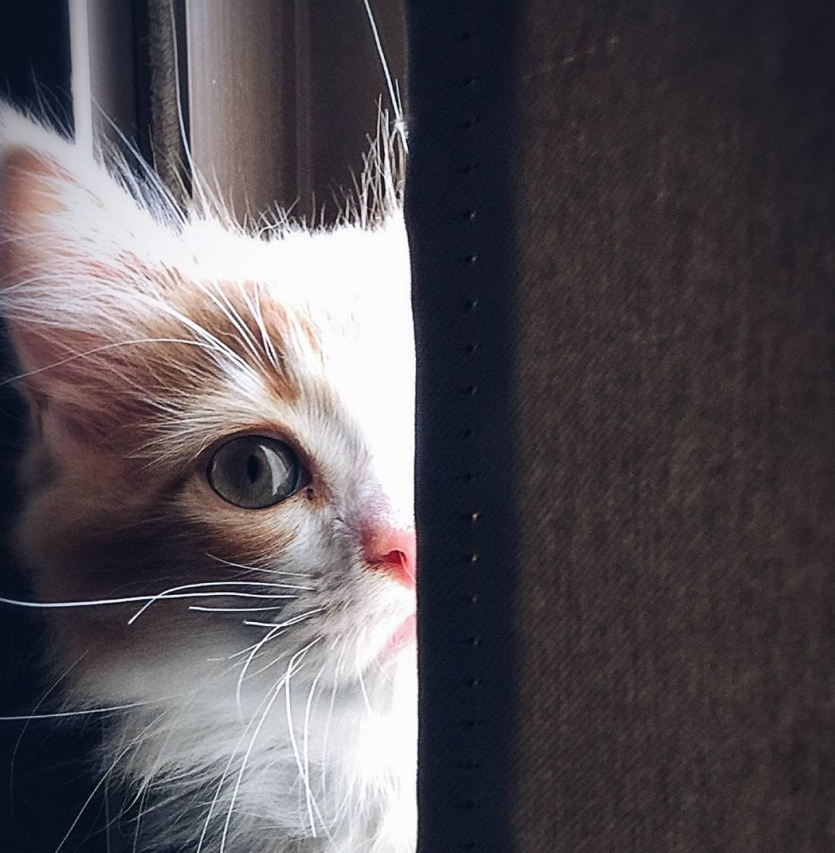 b7f12626d72d Οι γάτες μπορούν να αναγνωρίσουν το όνομά τους