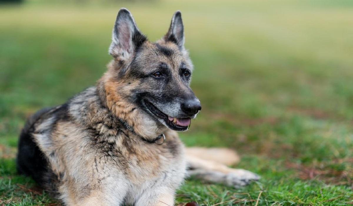 Το ζεύγος Μπάιντεν ανακοίνωσε το θάνατο του «προεδρικού σκύλου» Τσαμπ