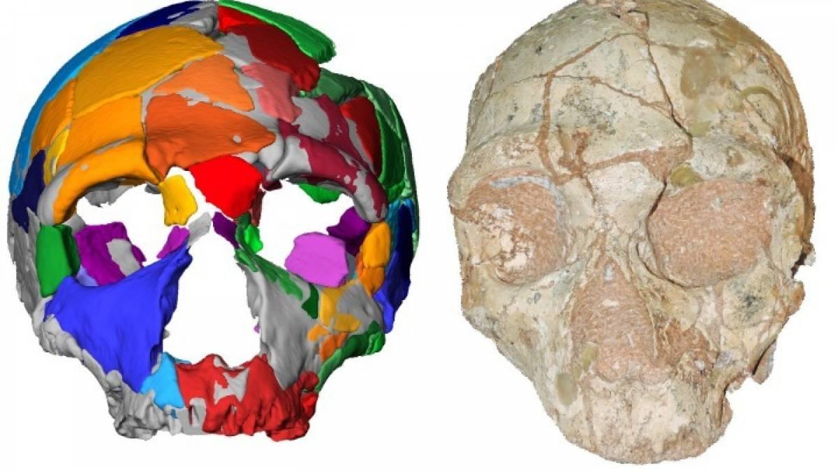 Ανθρώπινη εξέλιξη που χρονολογείται από τον άνθρακα