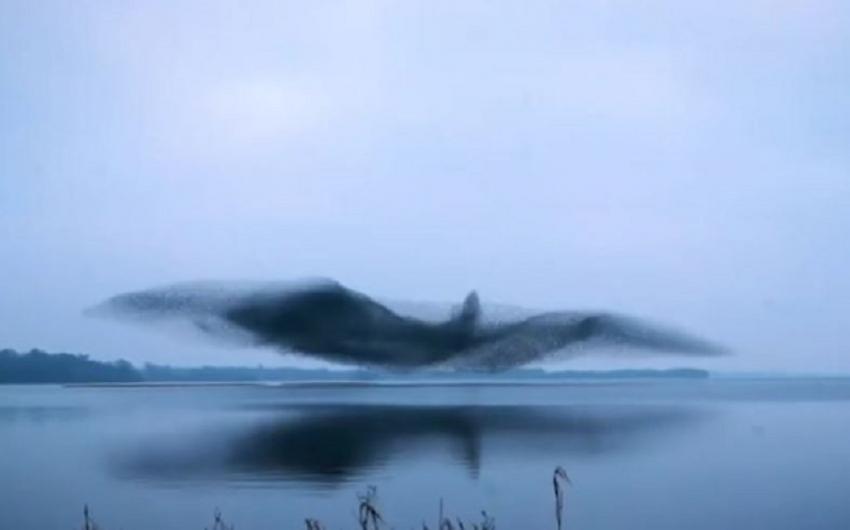 Σμήνος από ψαρόνια σε υπέροχο σχηματισμό