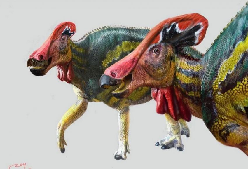 Αναγνωρίστηκε νέο είδος δεινοσαύρου – Τεράστιος, λειράτος και ειρηνικός