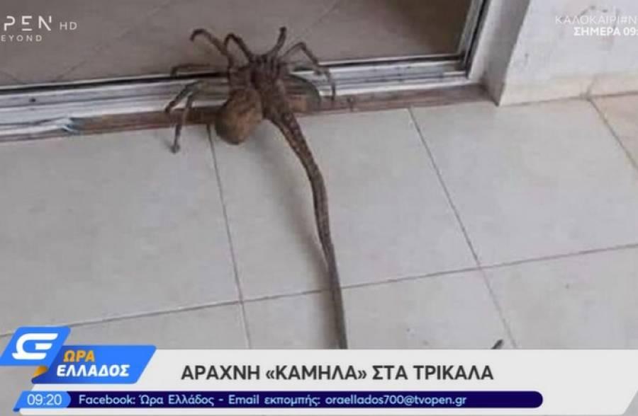 Εξωγήινη» αράχνη έκανε την εμφάνισή της στα Τρίκαλα