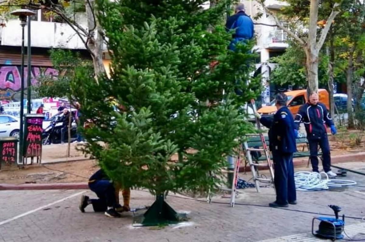 """Αποτέλεσμα εικόνας για Εξάρχεια δέντρο"""""""